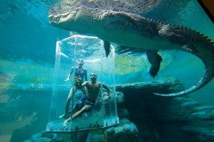 Crocosaurus Cove Aquarium