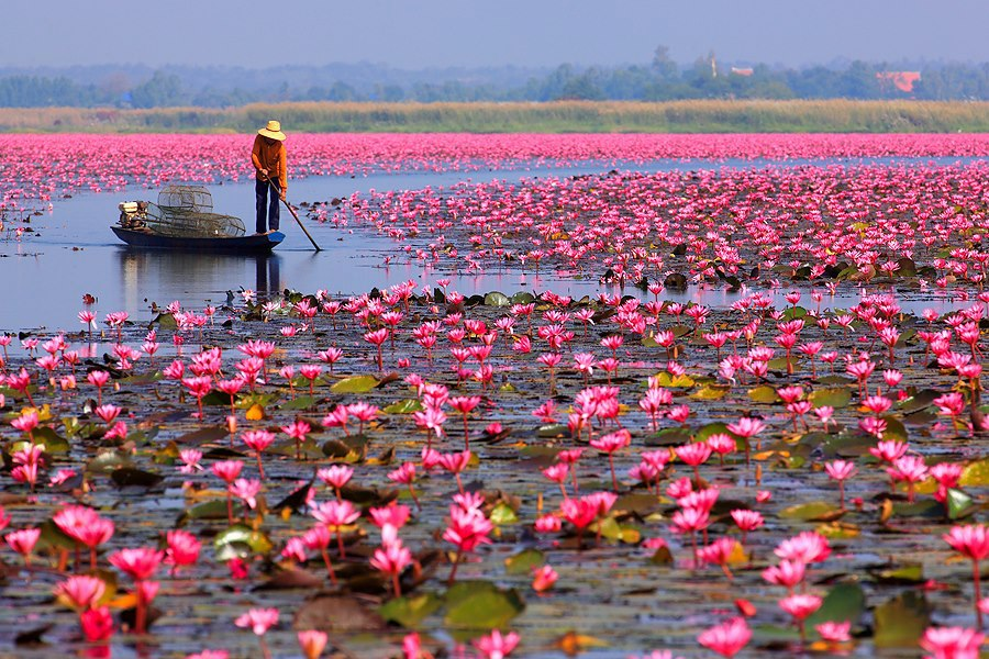 Image result for lily lake in thailand,nari